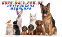 Ветеринарна медицина курсові, дипломні, реферати